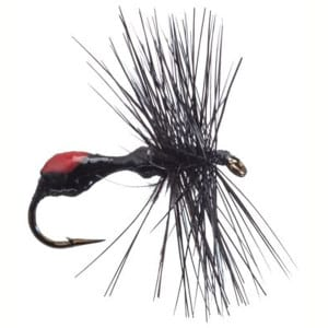 BETTS BLACK ANT