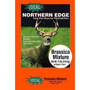 northern edge brassica mixture