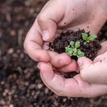 Plant Seeds for Spring